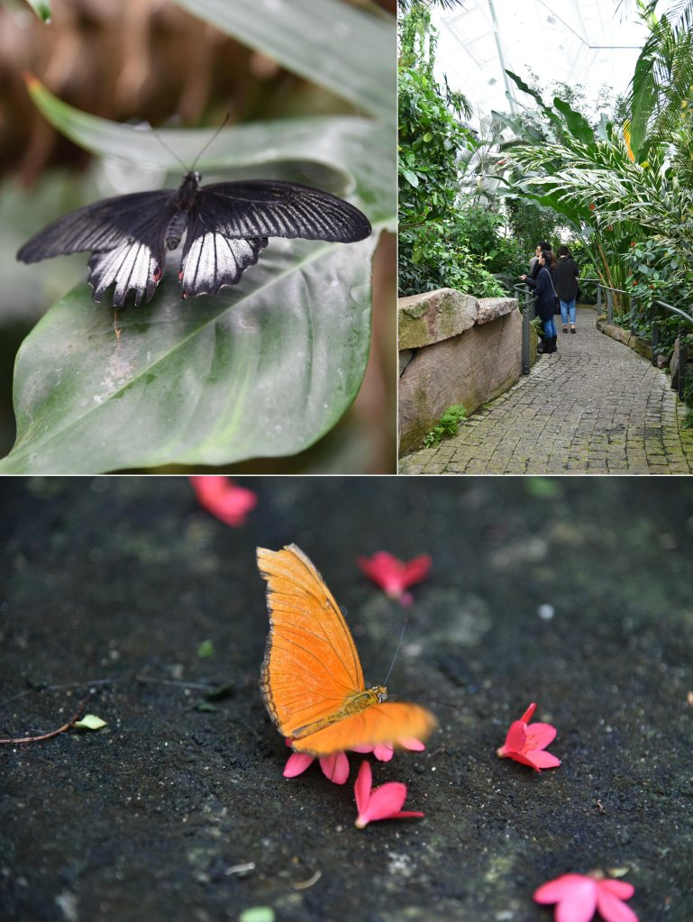 Butterfly Conservatory - Niagara Parks